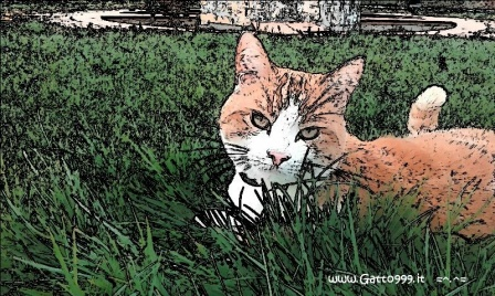 Gatto