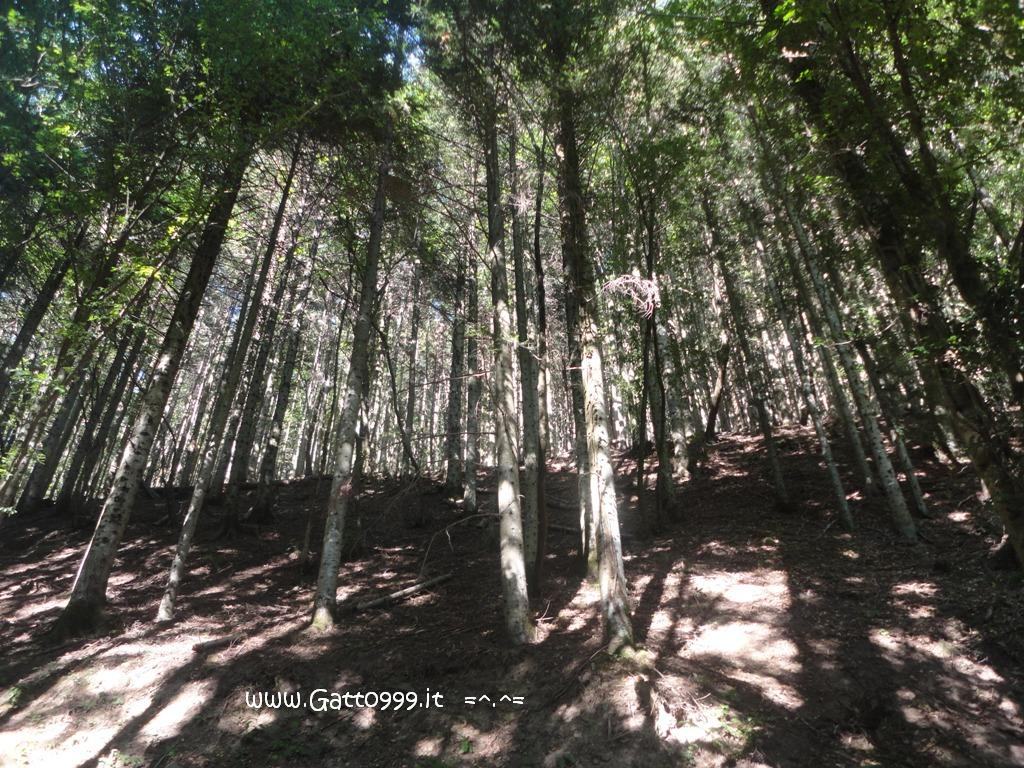 Foresta Forest Bosco Bosque