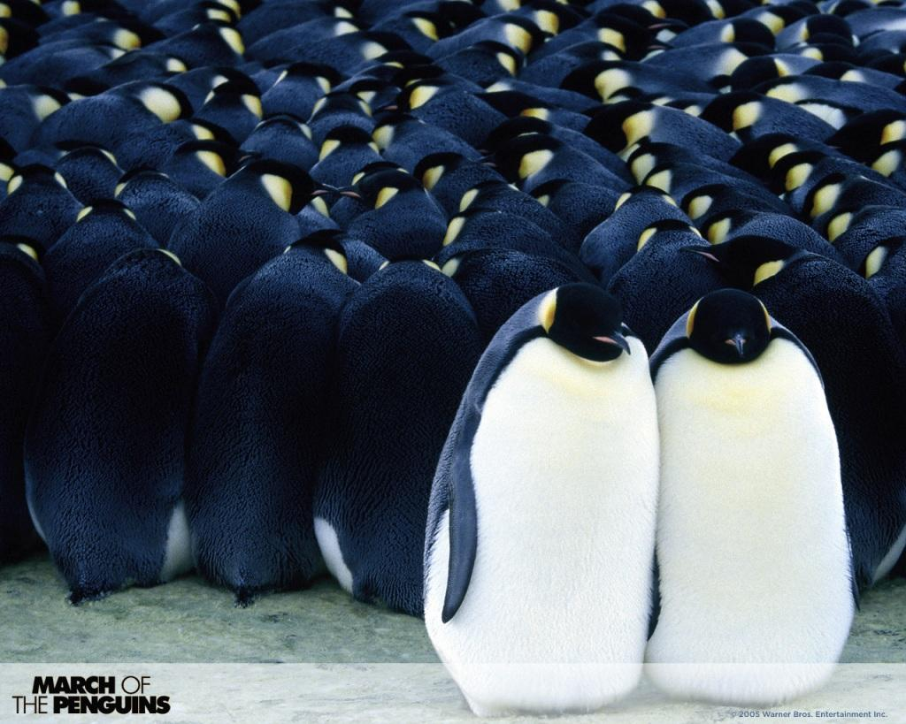 La Marcia dei Pinguini - March of Penguins
