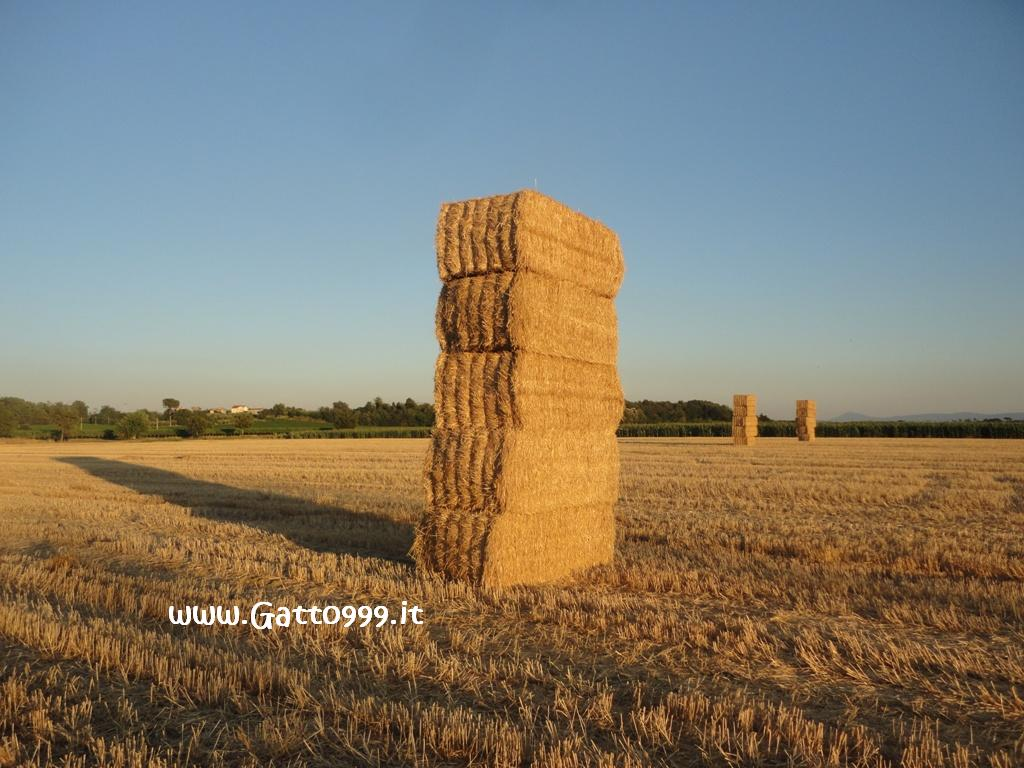 Covoni Paglia - Straw Sheaves - Haces Paja - Gerbes Paille