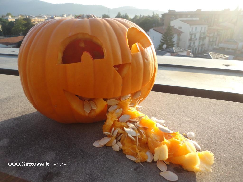 Zucca Halloween Gatto.Cat Come Fare Una Zucca Di Halloween