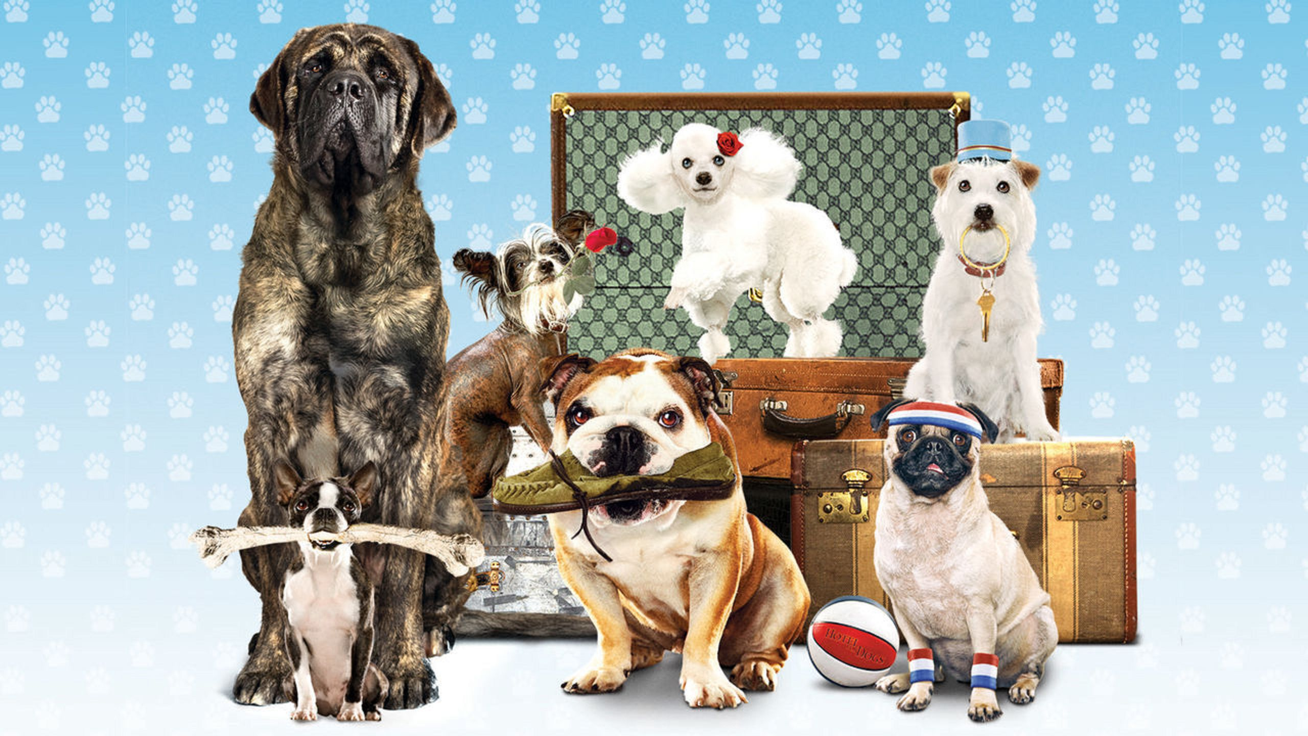 Hotel for Dogs 2009 wallpaper and poster