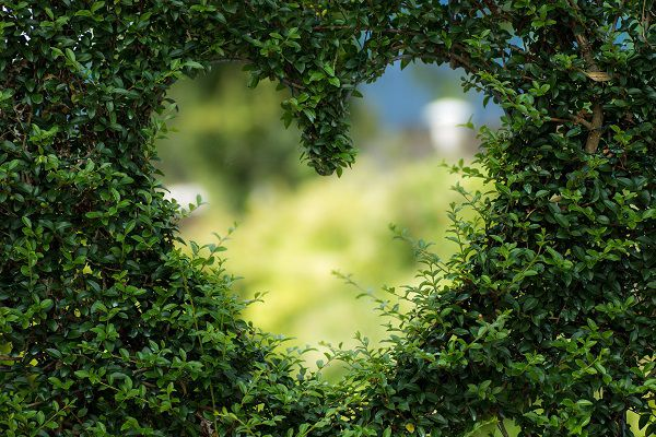 Best 20 Fantasy - Migliori Film - I Love - green forest heart cuore coeur