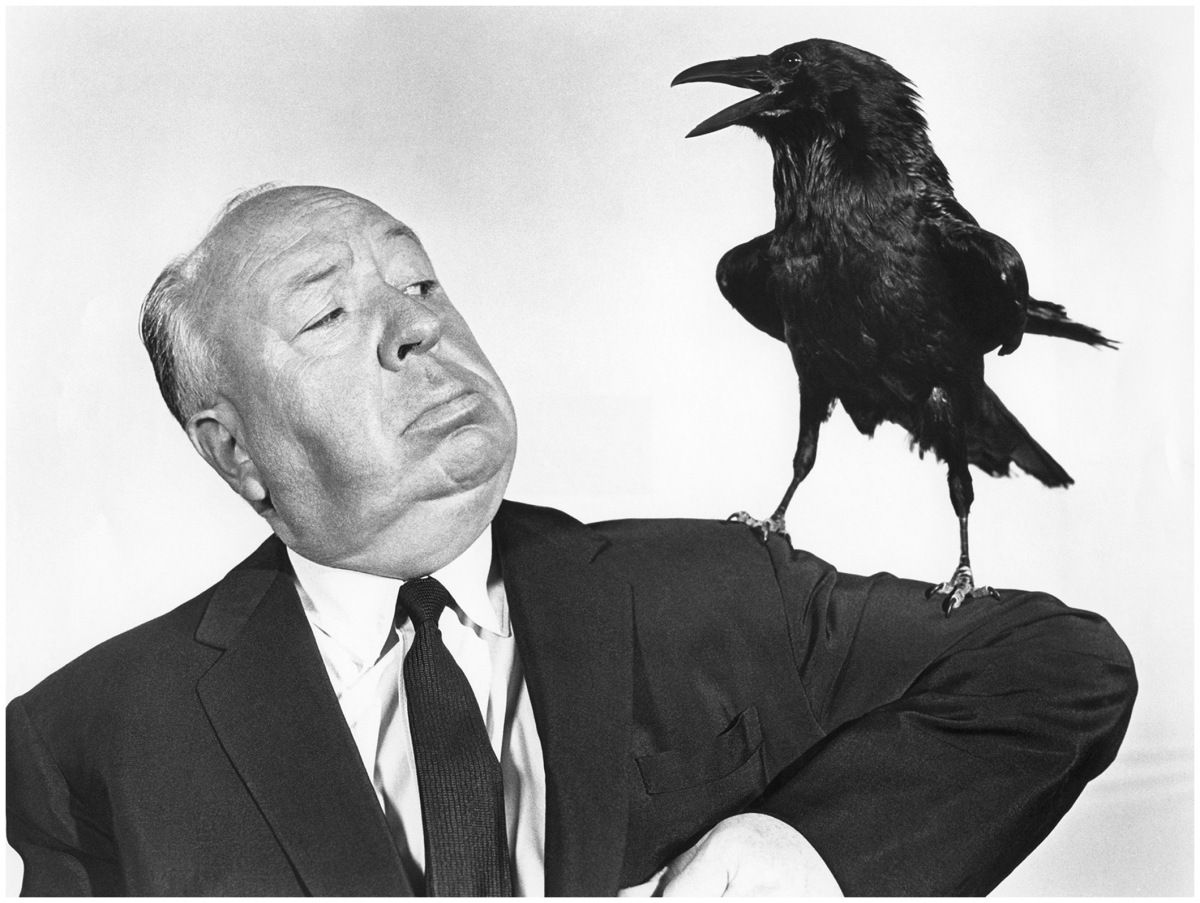 The Birds - Alfred Hitchcock 1963 - portrait with raven