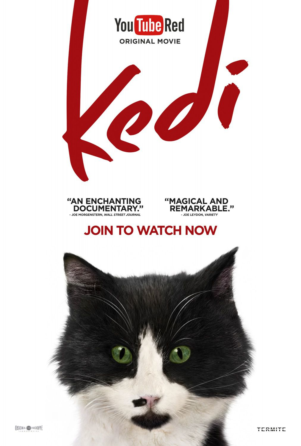 Film - Kedi -  Aslan Parcast Hunter