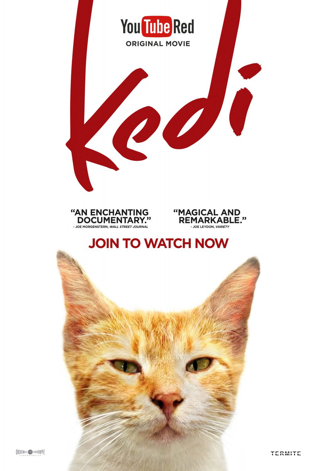 Film - Kedi - Bengu Lover