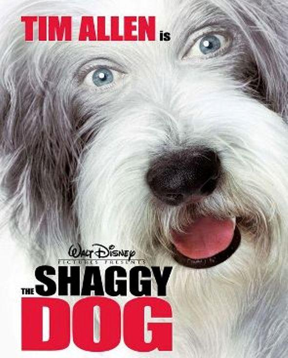 Shaggy Dog