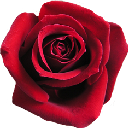 tn roses 1 (10).png